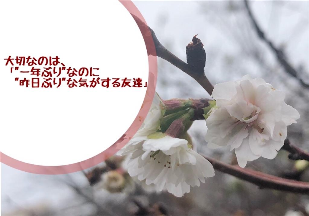 f:id:kurone-cocoa:20191230185007j:image