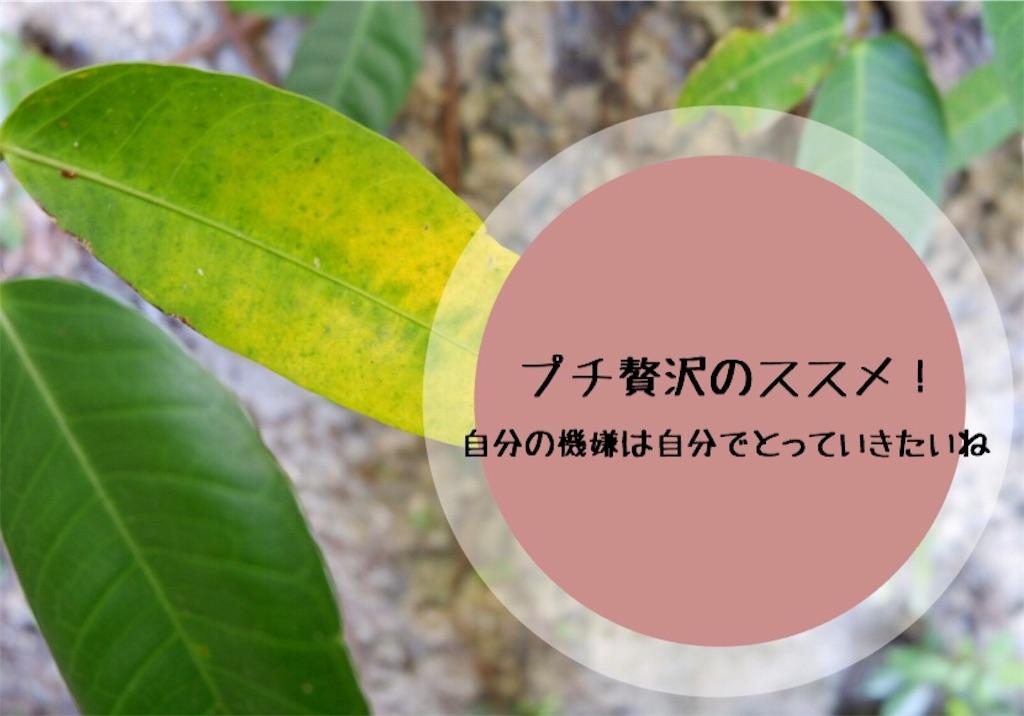 f:id:kurone-cocoa:20200102211620j:image