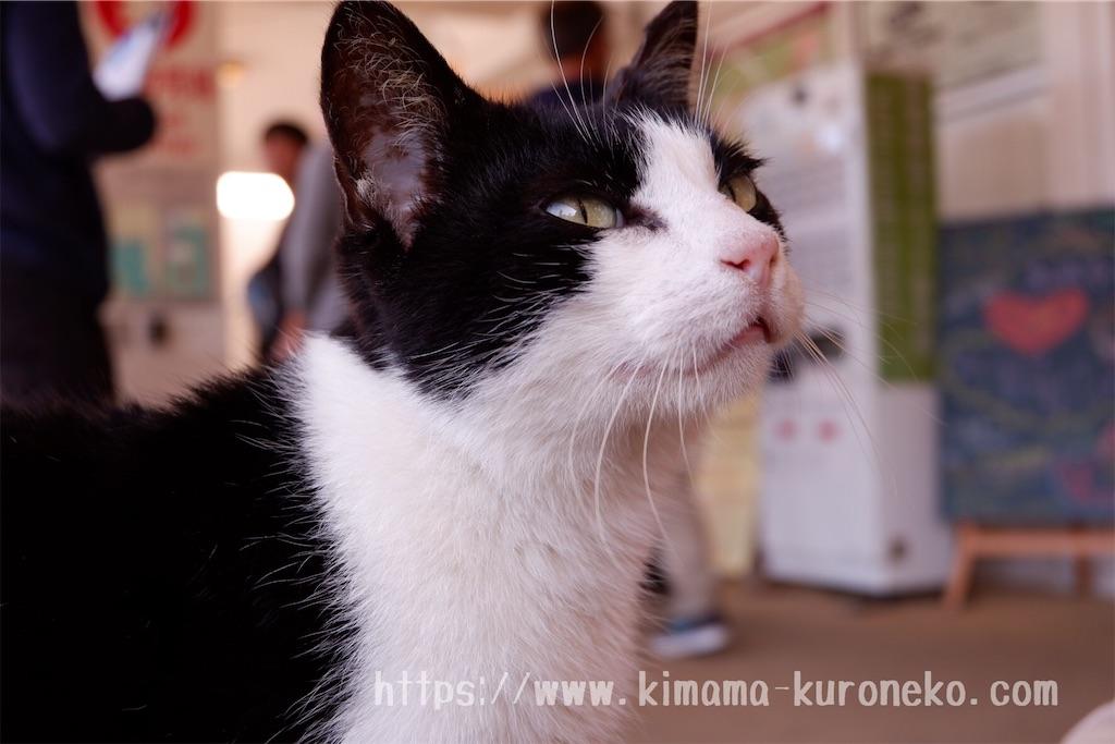 f:id:kurone-cocoa:20200103073422j:image