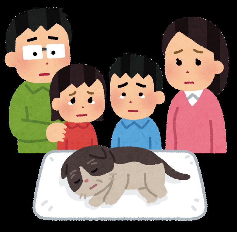 寿命がきた猫を看取る家族