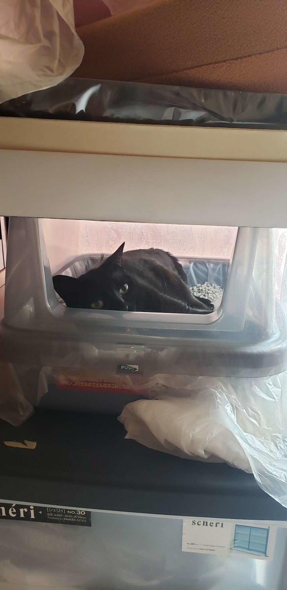 トイレの中で寝る猫