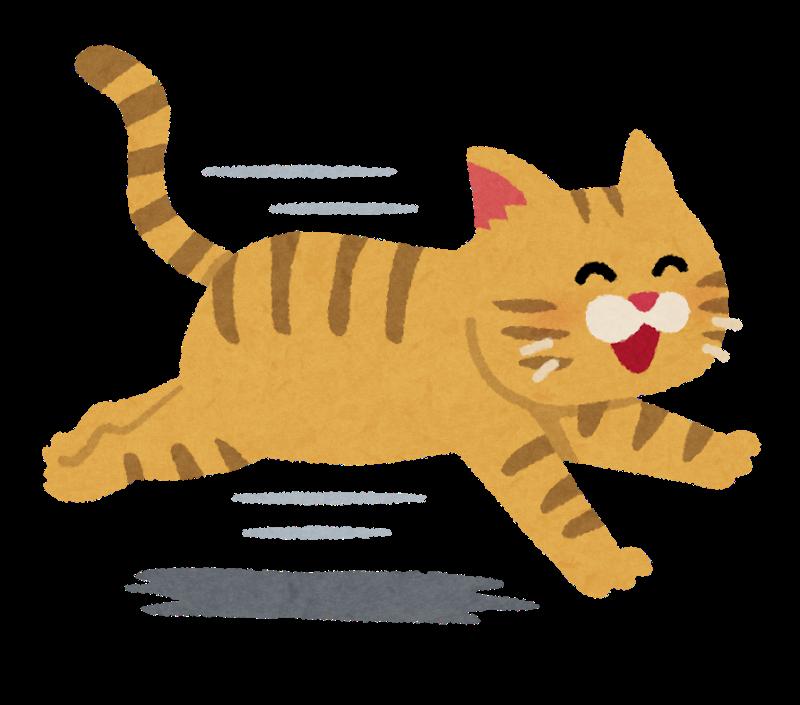 嬉しそうに走る猫