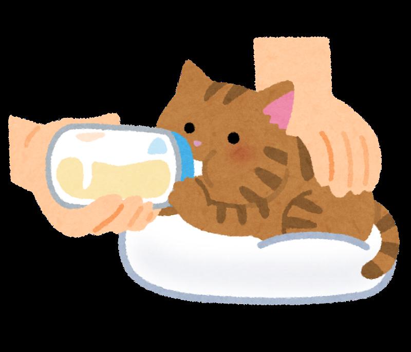 子猫のイラスト