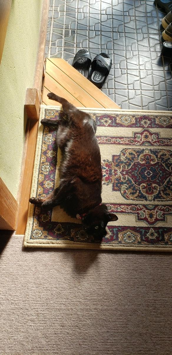 玄関マットで寝る猫の写真