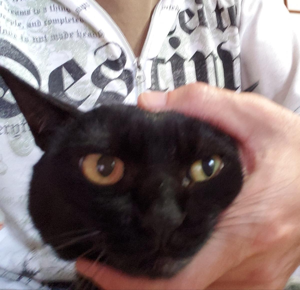 猫の頭をやさしく掴んでいる写真