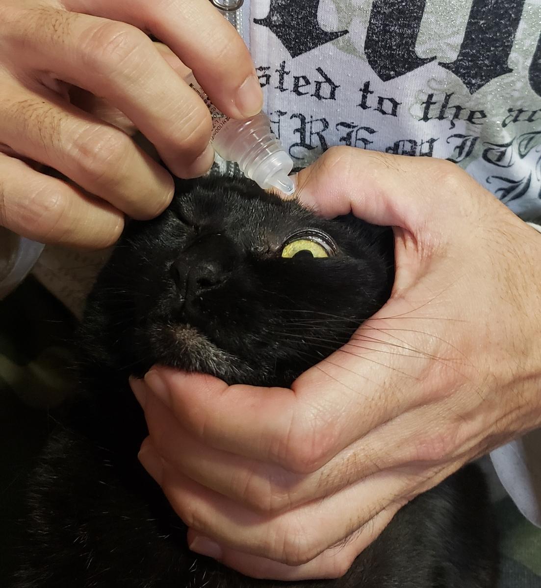 猫に目薬をさす写真