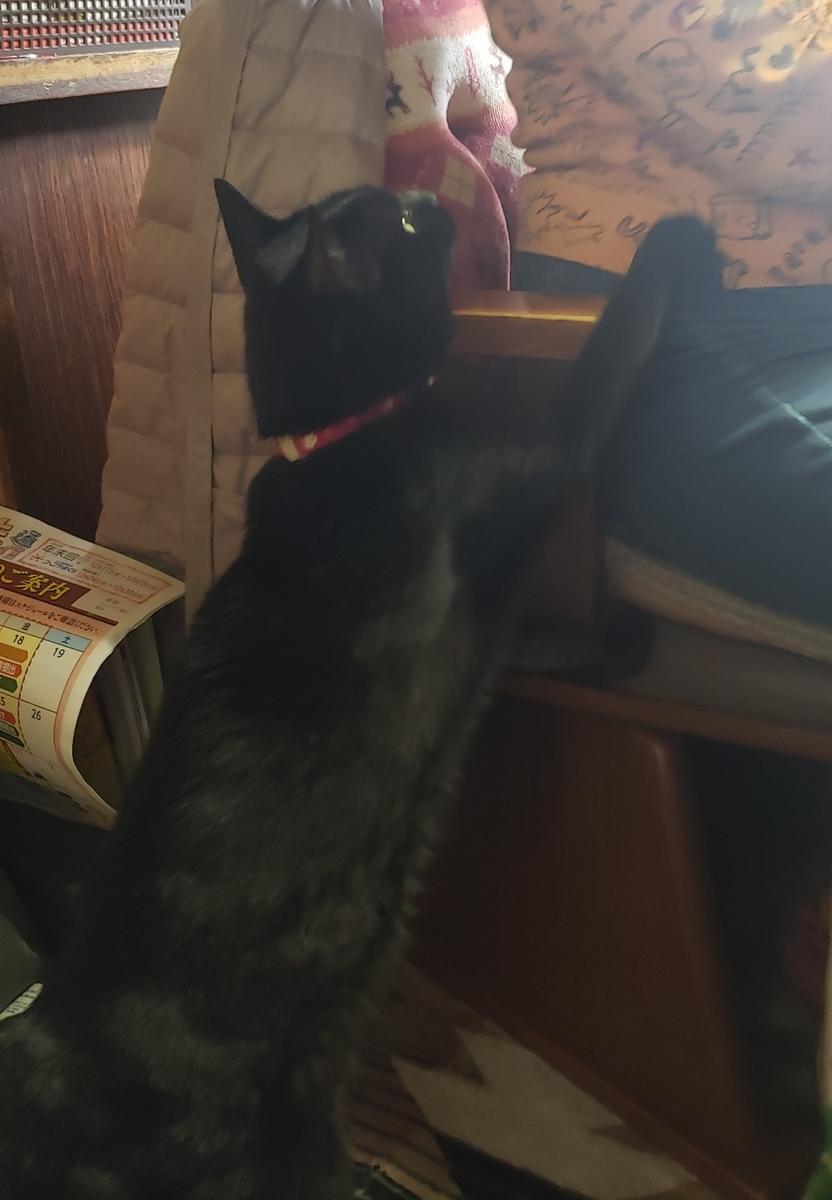 おねだりをする猫の写真