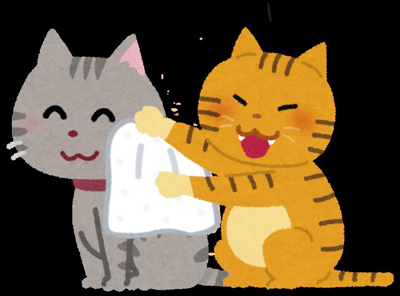 猫を拭いてあげている猫のイラスト