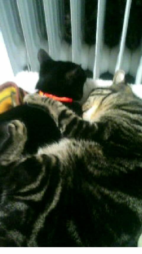 2匹の猫が仲良く寝ている画像