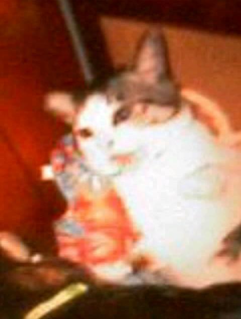 怒っている猫の写真