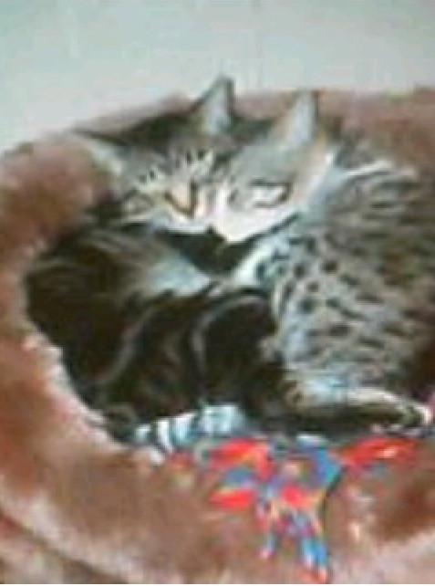猫2匹が一緒に寝ている写真
