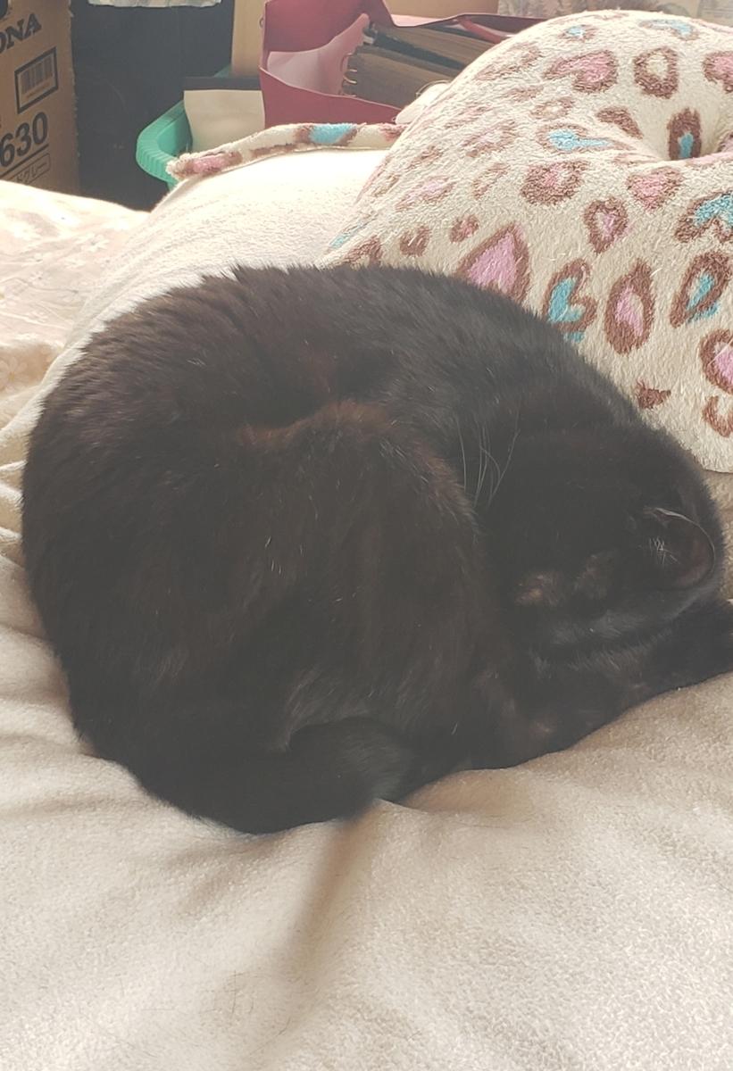 丸まって寝る猫の写真