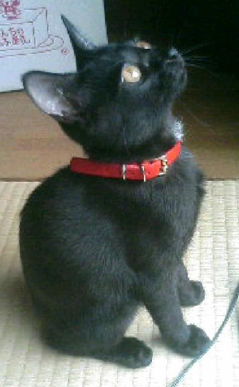 見上げる子猫の写真