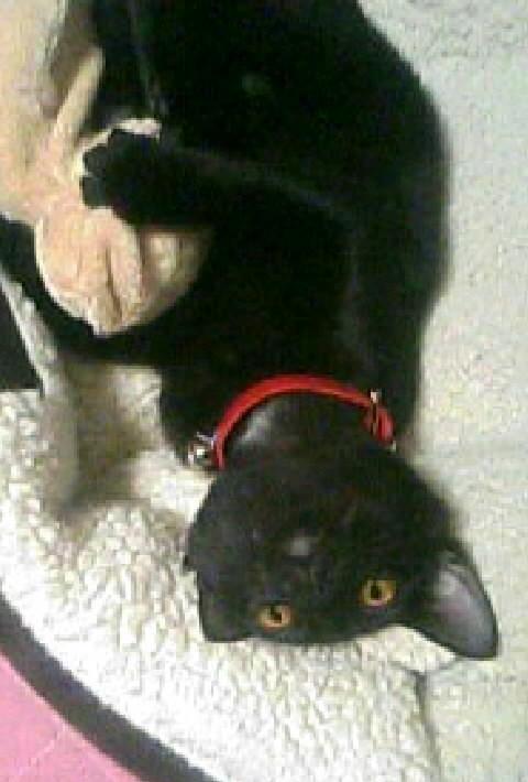 ぬいぐるみを抱いて寝転がる子猫の写真
