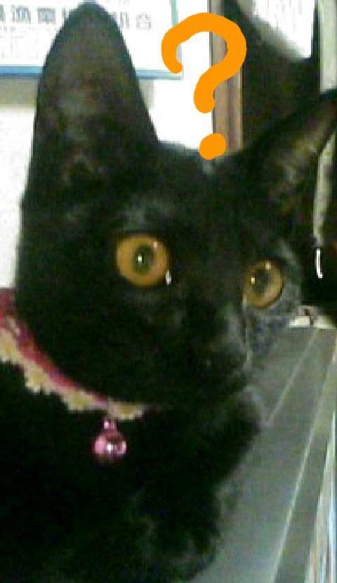 不思議に思っている猫の写真