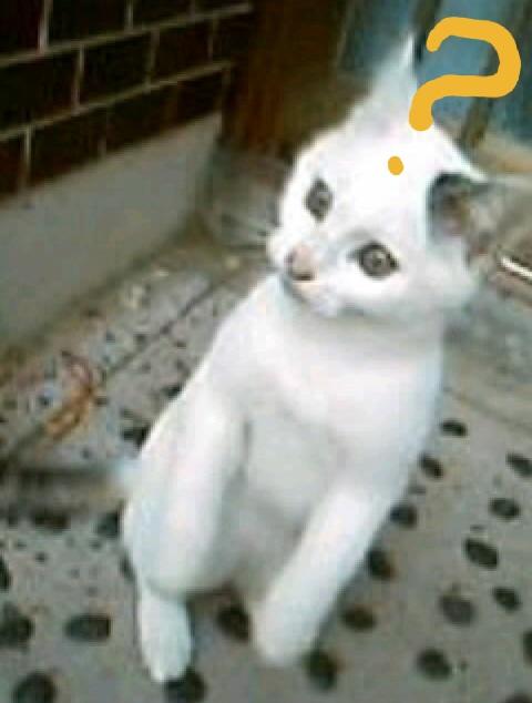 不思議に思っている猫の写真3
