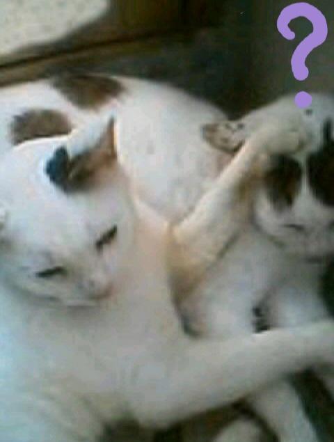 不思議に思っている猫の写真5