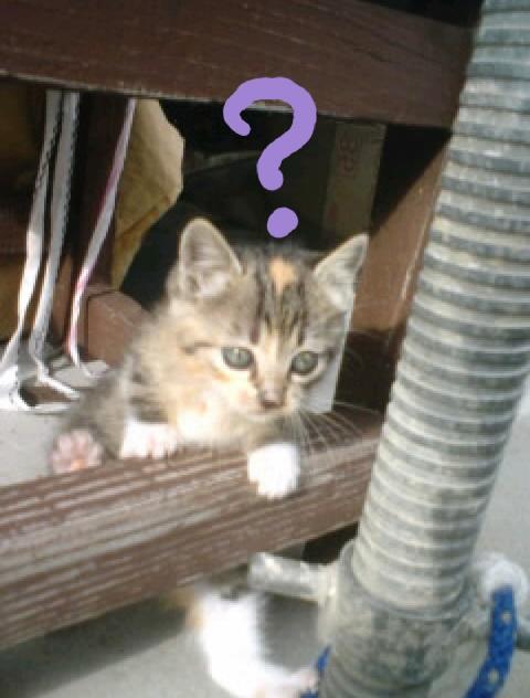 不思議に思っている猫の写真6