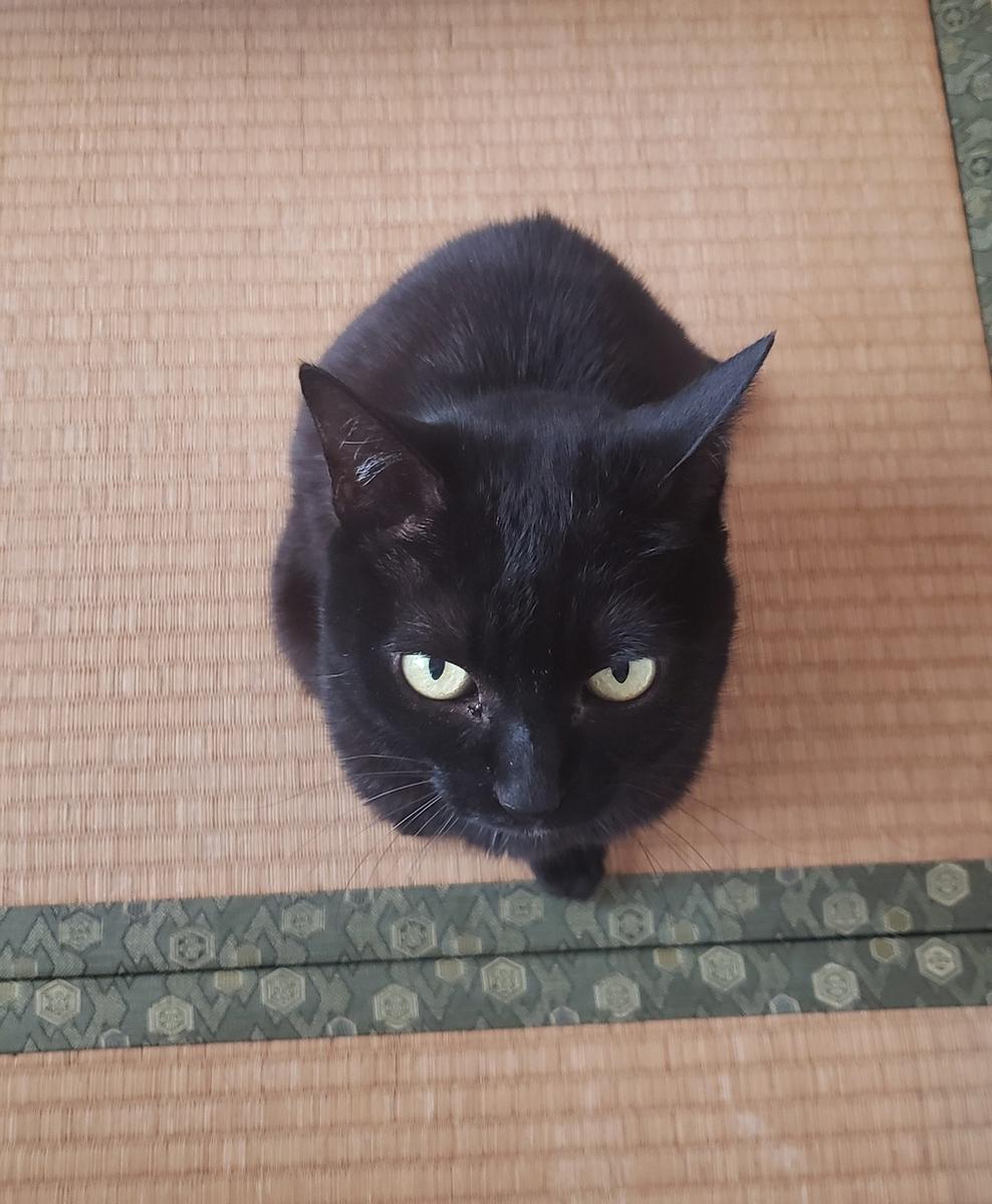 見上げる猫の写真