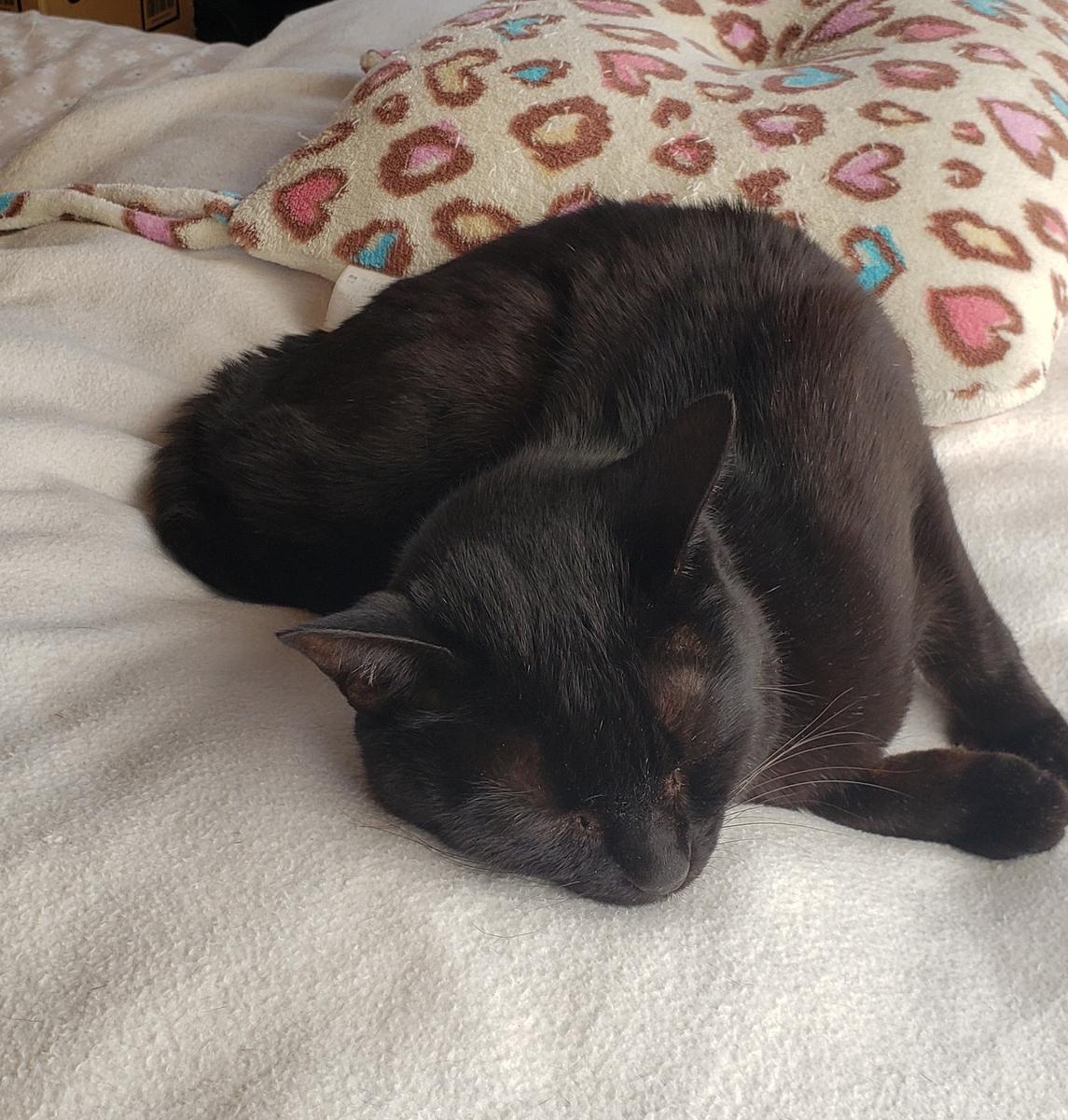 ねじれて寝る猫の写真