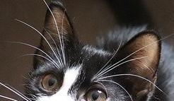 猫のヒゲの写真1