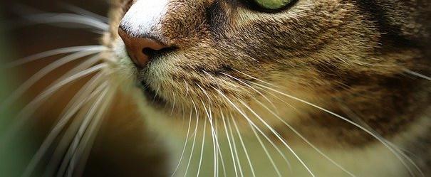 猫のヒゲの写真3