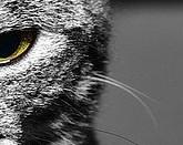 猫のヒゲの写真4