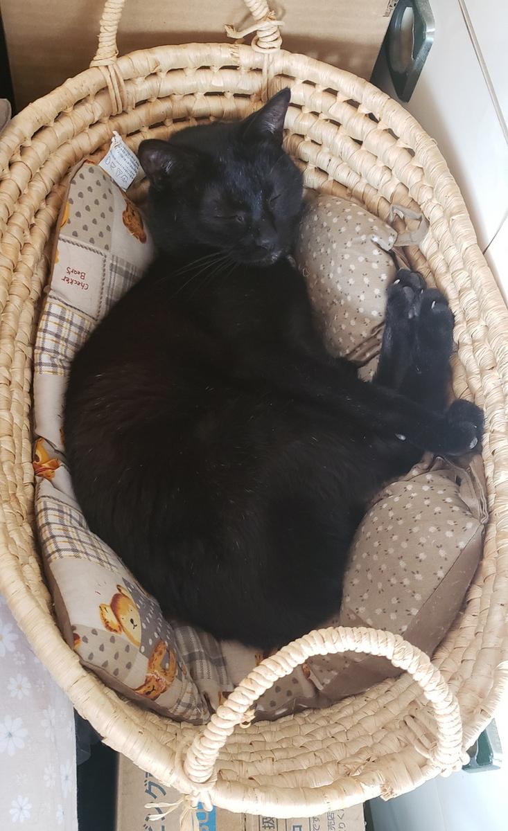 寝る猫の写真2