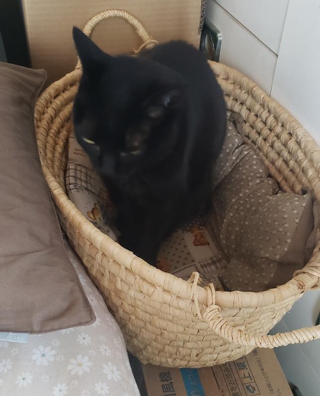 カゴに入った猫の写真
