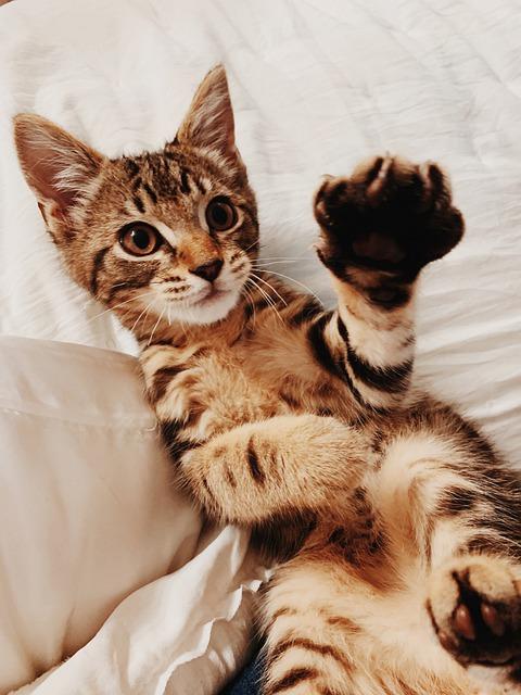 猫パンチをする猫の写真