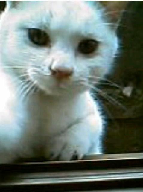 猫パンチをする猫の写真2