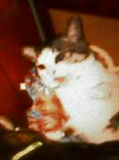 猫パンチをする猫の写真3
