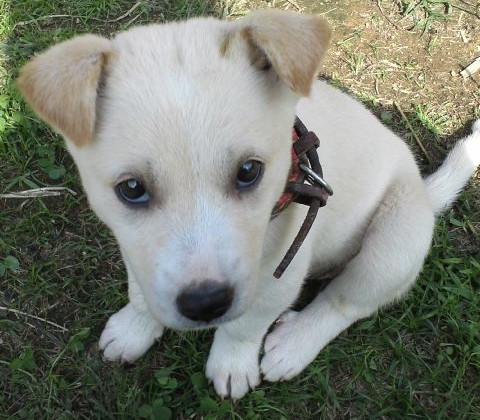 子犬の写真2