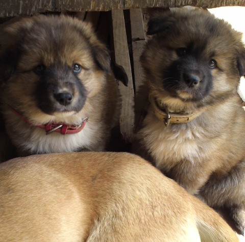 子犬の写真3