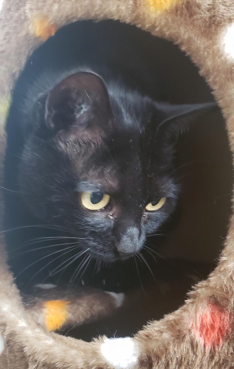 何かを狙っている猫の写真