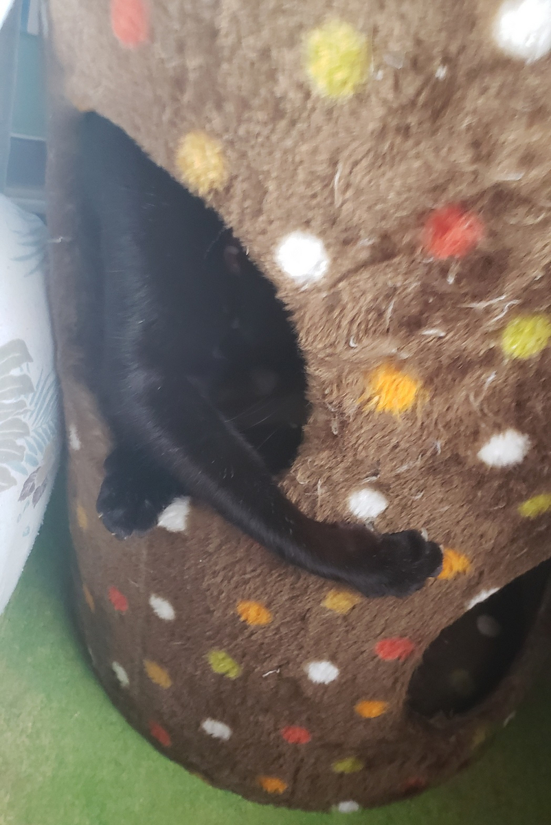 遊んでる猫の写真