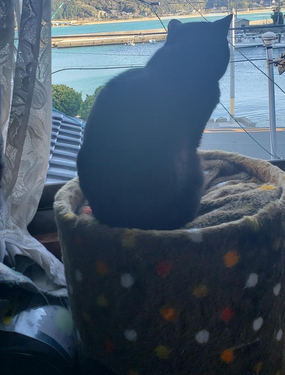 外を見る猫の写真