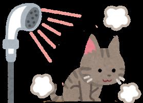 シャワーを浴びている猫のイラスト