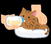 ミルクを飲んでいる子猫のイラスト