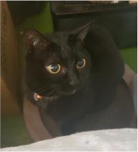目を丸くしている猫の写真