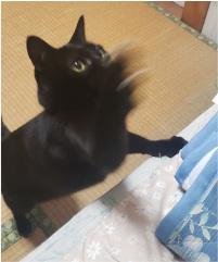 じゃれる猫の写真