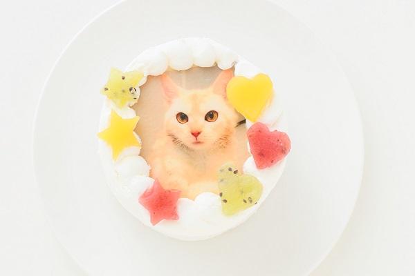 猫用ケーキの写真