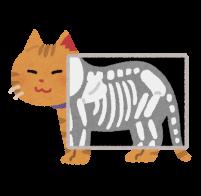 猫のレントゲン写真のイラスト