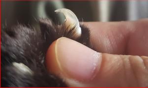 猫の爪の写真