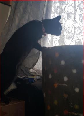 タワーに登ろうとする猫の写真