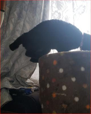 タワーに登ろうとする猫の写真2