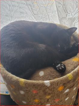 丸くなって寝る猫の写真