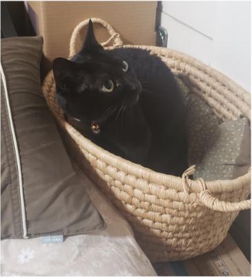 ビックリしている猫の写真
