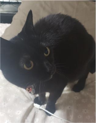 ビックリしている猫の写真2