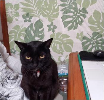 ヒザの上に乗る猫の写真